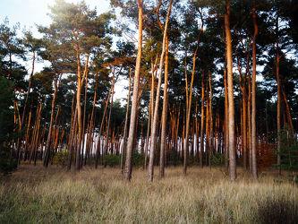 Bild mit Natur,Bäume,Wälder,Sonnenuntergang,Sonnenaufgang,Wald,Baum,Feld,Wäldchen,Felder
