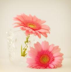 Bild mit Pflanzen, Pflanzen, Blumen, Gerberas, Blume, Gerbera, Stillleben, Blüten, blüte, vase