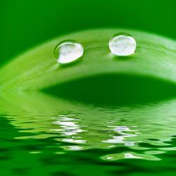 Bild mit Natur, Gräser, Sonne, Gras, Wiese, Wiesengras, Wassertropfen, Regentropfen, Wasserperlen, Feld, Felder, Tropfen, Sonnenstrahlen, Wiesen, Weide, Weiden, Regen