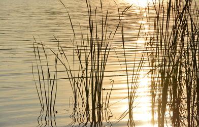 Bild mit Natur,Wasser,Gewässer,Sonnenuntergang,Sonnenaufgang,Schilf,Meer,See,Ruhe am See,Am See