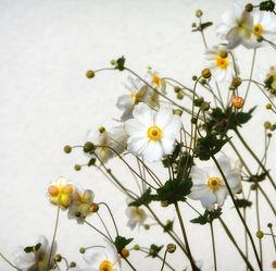 Bild mit Pflanzen, Gräser, Blumen, Weiß, Blume, Pflanze, Gras, Wiese, Wiesengras, Feld, Felder, Blüten, blüte, Wiesen, weiße Blüten, grüne Wiese