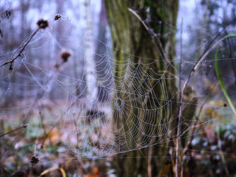 Bild mit Natur, Winter, Herbst, Spinnen, Winterzeit, Spinnennetz, Netz, Spinne, Halloween, Grusel, Spinnennetze