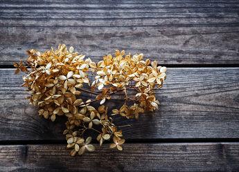 Bild mit Pflanzen, Blumen, Holz, Holzstruktur, Holzwand, Blume, Pflanze, Holzbretter, hortensien, Hortensie