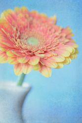 Bild mit Blumen, Gerberas, Blume, Gerbera, Blüten, blüte, vase