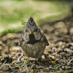 Bild mit Vögel