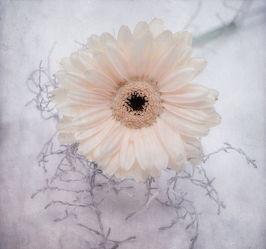 Bild mit Blumen, Weiß, Blume, Blüten, VINTAGE, blüte, pastell, soft, weiße Blumen, weiße Blüten
