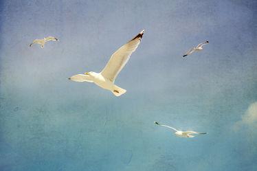 Bild mit Vögel, Vögel, Möve, Ostseebilder, Möven
