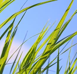 Bild mit Natur, Grün, Gräser, Gras, Wiese, Feld, Felder, Wiesen, Weide, Weiden