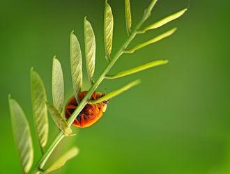 Bild mit Natur, Grün, Gräser, Insekten, Gras, Makros, Insekt, Käfer, Krabbeltiere
