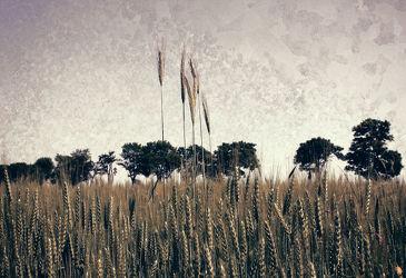 Bild mit Natur, Gräser, Gras, Wiese, Feld, Felder, VINTAGE, Wiesen, Weide, Weiden