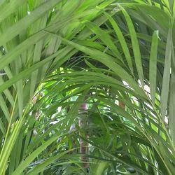 Bild mit Natur, Grün, Pflanzen, Wald, Pflanze, Grünpflanzen