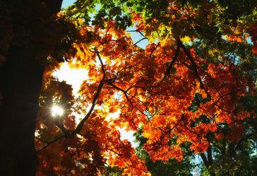 Bild mit Natur,Bäume,Herbst,Baum,Blätter,Sonnenlicht