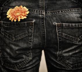 Bild mit Blumen, Gerberas, Blume, Gerbera, Stillleben, Blüten, blüte, Mensch, Person, hose, hosen, jeans