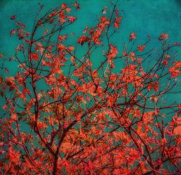 Bild mit Natur, Bäume, Rot, Herbst, Baum, Blätter, Blatt, Herbstblätter, Herbststimmung, rote blätter