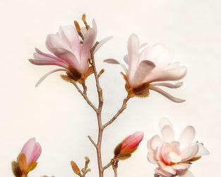 Bild mit Pflanzen, Blumen, Blume, Pflanze, Blüten, VINTAGE, blüte, Blütenblätter, pastell