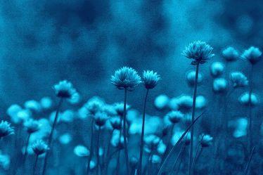 Bild mit Pflanzen, Blumen, Blau, Kräuter, Nutzpflanzen, Blume, Pflanze, Abstrakt, Blüten, garten, Schnittlauch