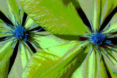 Bild mit Grün, Pflanzen, Blumen, Blau, Makrofotografie, Blume, Pflanze, Abstrakt, Blüten, Clematis, Blütenblätter