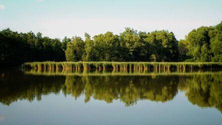 Bild mit Natur, Wasser, Gräser, Wald, Landschaft, See, Spiegelung, reflection