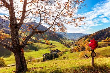 Blick ins Münstertal im Schwarzwald