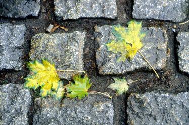 Herbstblätter auf StraÃ?enpflaster
