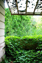 Grün zugewachsener Balkon