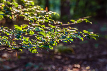 Bild mit Natur, Grün, Bäume, Jahreszeiten, Sommer, Sonne, Wald, Landschaft, Licht, Ruhe, Entspannung, Bunt, Erholung, Sonnenstrahlen, Relaxen, Schatten, Einsam, draussen