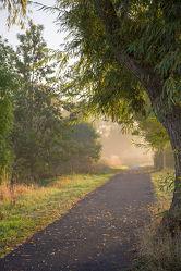 Bild mit Natur, Pflanzen, Tageslicht, Straßen und Wege, Nebel, Nutzpflanzen, Weg, Ruhe, Landschaften & Stimmungen, Morgenstimmung, Nebelauflösung, Tag, Stimmung