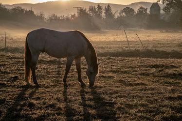 Bild mit Natur, Bäume, Sträucher, Sonnenaufgang, Nebel, Tier, Licht, Pferd, Weiden, Schatten, Dunst, grasen