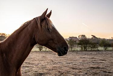 Bild mit Tiere, Natur, Sonnenaufgang, Pferde, Pferde, Landschaft, Landschaft, Gegenlicht, Licht, Kinderbild, Kinderbilder, Stille, Wiesen, Weide, reiten, Schatten, Einsamkeit, Koppel, Morgens, Pferdeliebe, pferdebilder, pferdebild