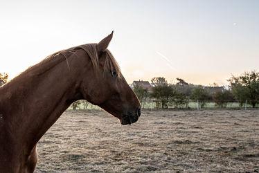 Bild mit Tiere, Natur, Sonnenaufgang, Pferde, Pferde, Landschaft, Gegenlicht, Licht, Kinderbild, Kinderbilder, Stille, Wiesen, Weide, reiten, Schatten, Einsamkeit, Koppel, Morgens, Pferdeliebe, pferdebilder, pferdebild