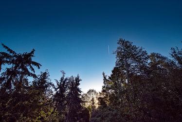 Bild mit Natur, Bäume, Blau, Sommer, Sonnenaufgang, Wald, Landschaft, Licht, Perspektive, Schatten