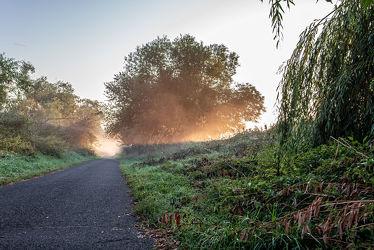 Bild mit Natur, Grün, Pflanzen, Herbst, Sonnenaufgang, Nebel, Weg, Licht, Wiesen, Schatten, Einsam, Morgens