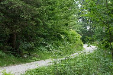 Bild mit Natur, Grün, Pflanzen, Bäume, Sommer, Wald, Baum, Waldweg, Spaziergang, Schotter, Oberbayern, Wirtschaftsweg