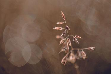 Gras im magischen Lichtzauber