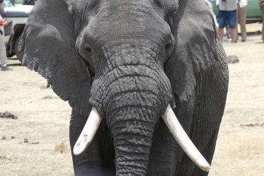 Bild mit Tiere, Natur, Elefant, Afrika, Naturschutzgebiet, safari