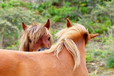 Bild mit Tiere, Säugetiere, Pferde, Pferd