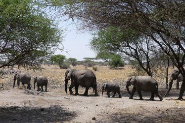 Bild mit Tiere, Säugetiere, Natur, Elefanten, Afrika, Nationalpark, safari