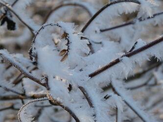 Bild mit Winter, Schnee, Winteraufnahmen, Winterzeit, Winterbilder, gefroren, Zweige, Frost Winter, Frost Winter, Wintertag, Sonne Schnee