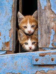 Neugierige Katzenkinder im blauen Fenster