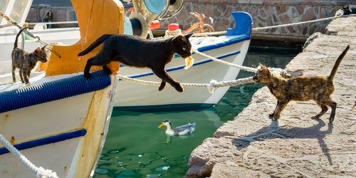 Katze springt vom Fischerboot
