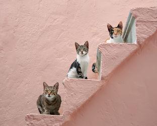 Drei Katzen auf rosa Treppe