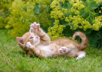 Verspieltes Kätzchen im Garten