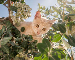 Kätzchen klettert in einem Baum