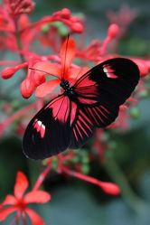 Bild mit Tiere, Natur, Blumen, Schmetterlinge, Blume, Tiere & Lebewesen, Fotografien Tiere, Schmetterling, Wildlife