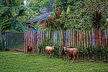 Bild mit Natur, Tier, Wiese, Zaun
