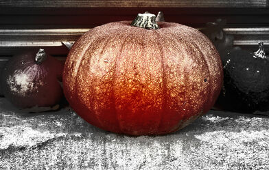 Bild mit Natur, Herbst, Halloween, Kürbis