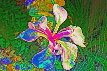 Bild mit Natur, Blume, Pflanze, Bunt, blüte