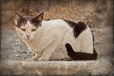 Bild mit Stein, Tier, Katze, Fragment