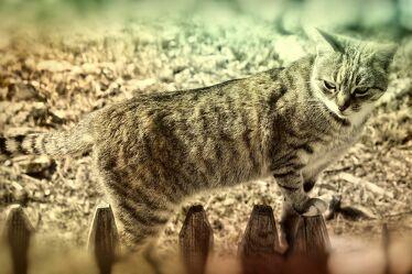 Bild mit Weiden und Wiesen, Tier, Katze, Zaun, Bretterzaun
