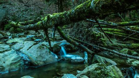 Bild mit Gewässer, Baumstamm, Waldbach, Landschaften im Winter